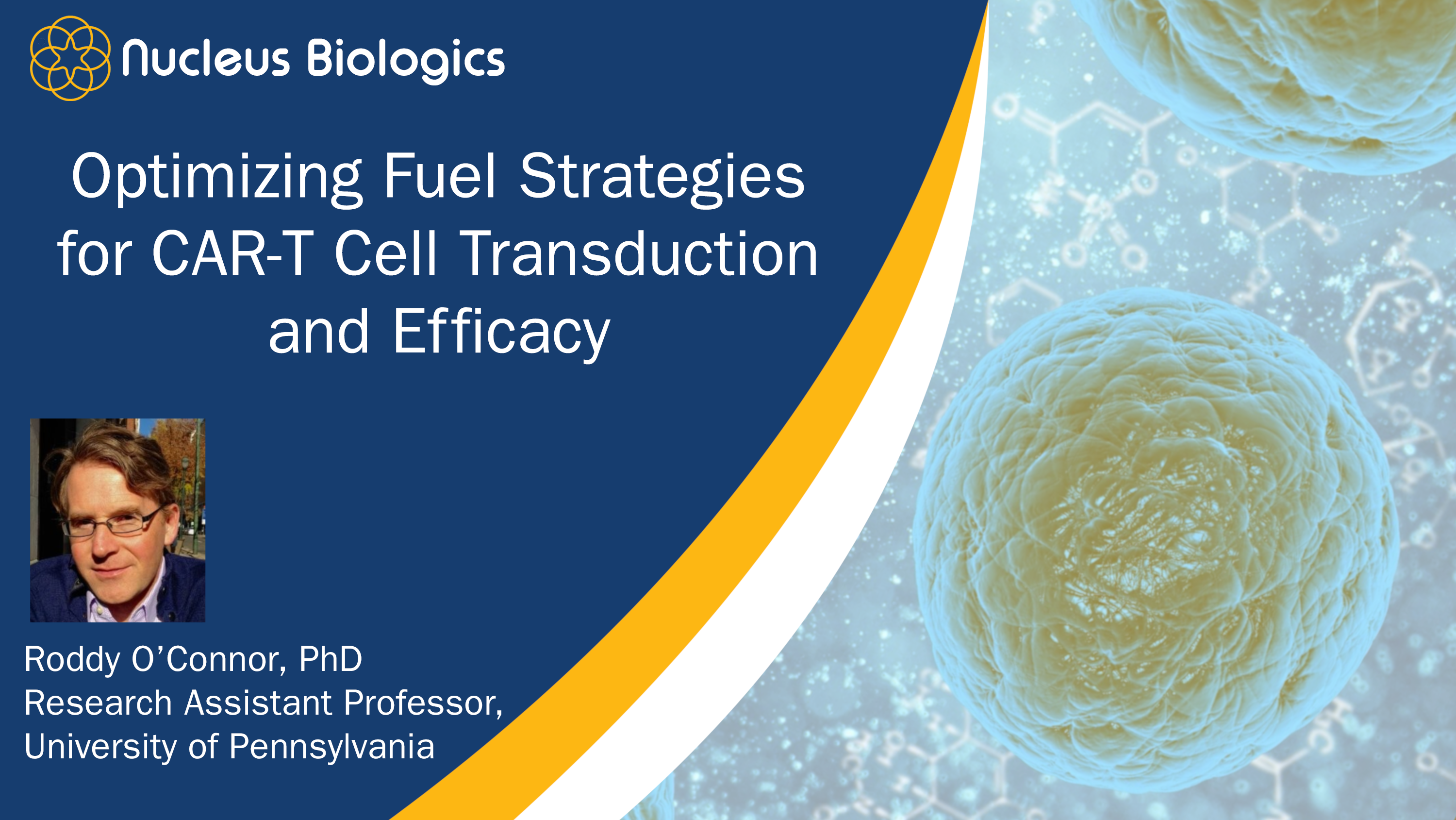Optimizing Fuel Strategies for CAR-T Cell Transduction & Efficacy