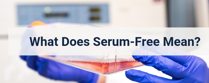 What is serum free media for cell culture?
