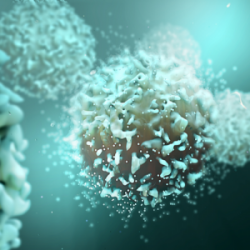 T Cell Media Guide: A Comprehensive Guide to Key Components